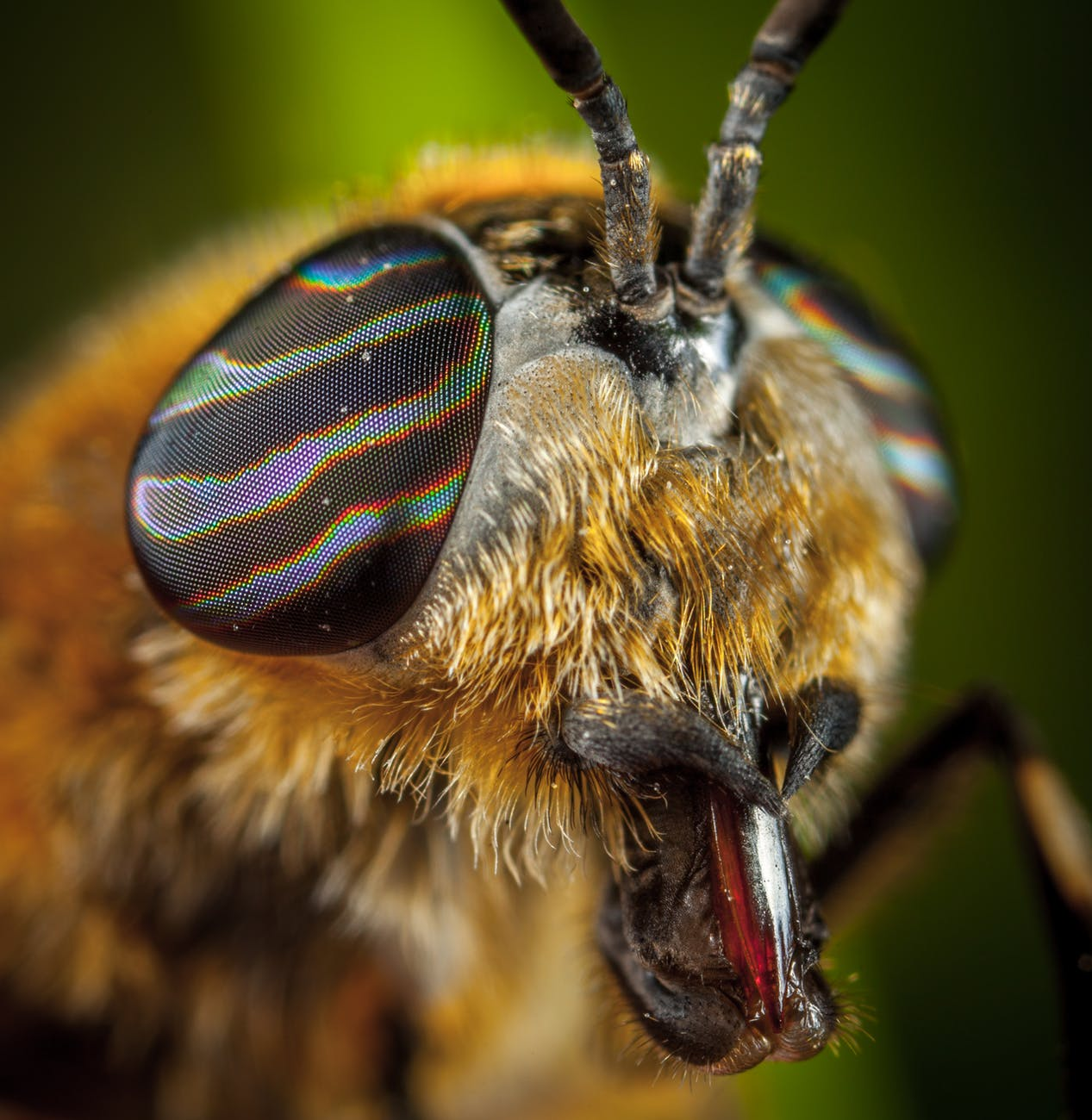 close up photo of insect